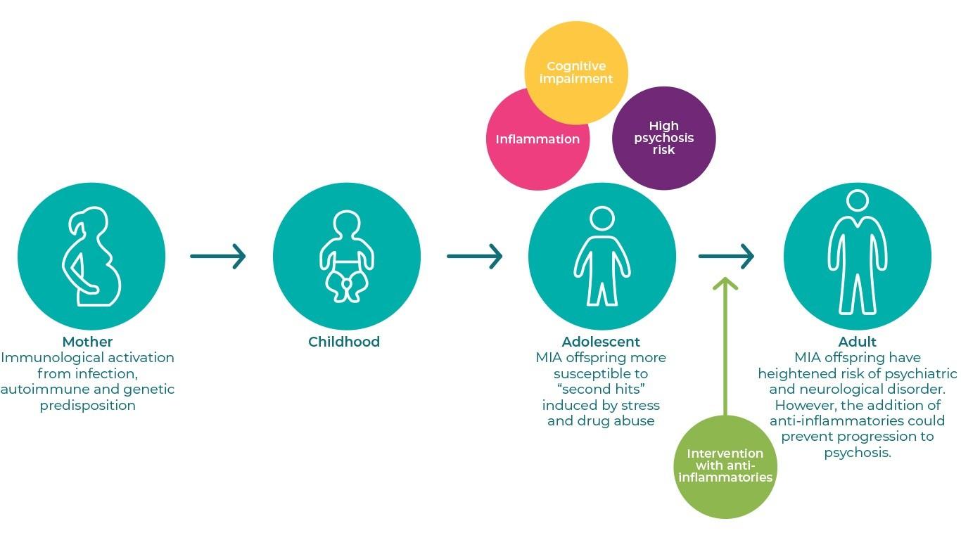 Maternal Immune Activation